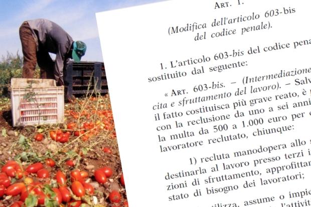 """EFFETTI DELLA NUOVA LEGGE  CONTRO LO SFRUTTAMENTO DEL LAVORO  AGRICOLTURA: """"NULLA E' CIO' CHE SEMBRA"""""""